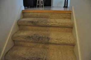 same day carpet cleaning in anaheim